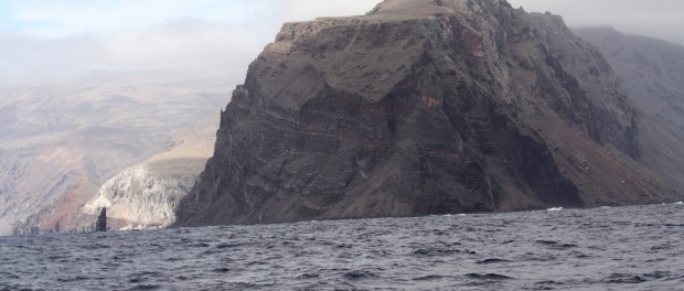 Shark city pacific coast explorers for Guadalupe island fishing