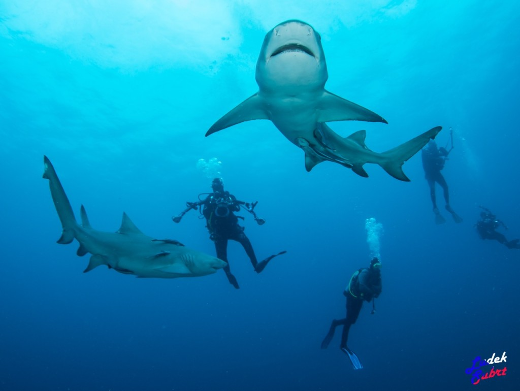 photographing sharks in the wild the team at dive photo just recently returned from florida some amazing shark encounters and they came back the photos to prove it